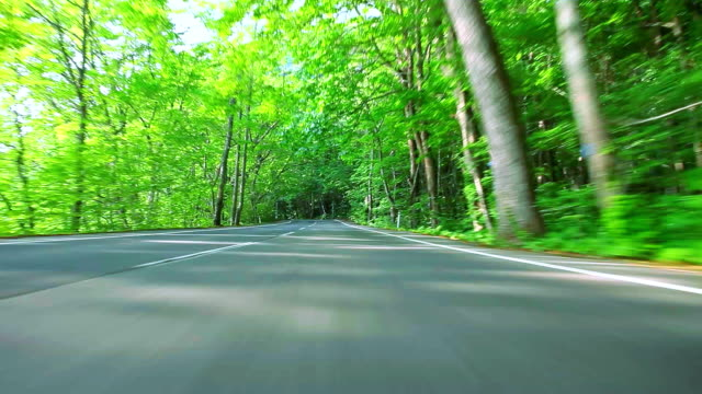 auto guida su strada forestale - zona pedonale strada transitabile video stock e b–roll