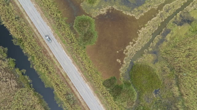 "car driving on highway la-82 ""creole nature trail"" surrounded by swamps in a wetland nearby grand chenier, louisiana, usa, in winter. top directly above drone video footage with the static camera. - louisiana stock videos & royalty-free footage"