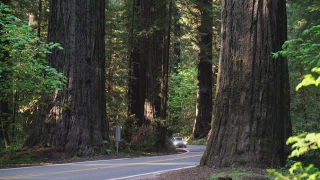 vídeos de stock, filmes e b-roll de carro que conduz na avenida da estrada dos giants na floresta do redwood em califórnia do norte, costa ocidental dos eua. - sequoia sempervirens
