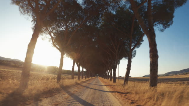 pov car driving on the roads of tuscany, countrside and pines - landscaped stock videos & royalty-free footage