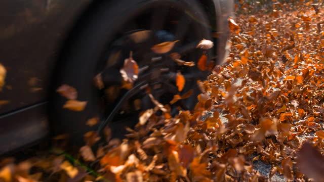 Laisse de voiture à l'automne
