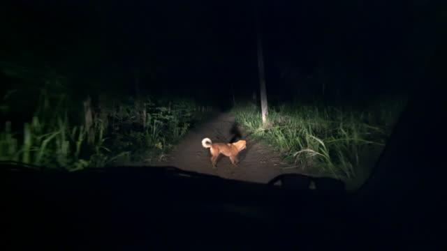 ms car scheinwerfer nach hund auf dunklen feldweg in der nacht - night vision stock-videos und b-roll-filmmaterial