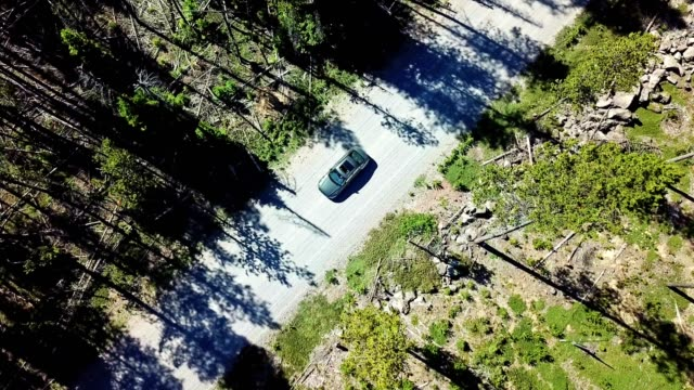 car in the forest of oregon driving in a dirty road - sports utility vehicle stock videos & royalty-free footage