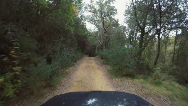 pov car off road driving in a winter rainy forest - strada in terra battuta video stock e b–roll