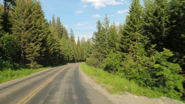stockvideo's en b-roll-footage met car pov on going to the sun road lined with tall evergreens in glacier national park - naaldbos