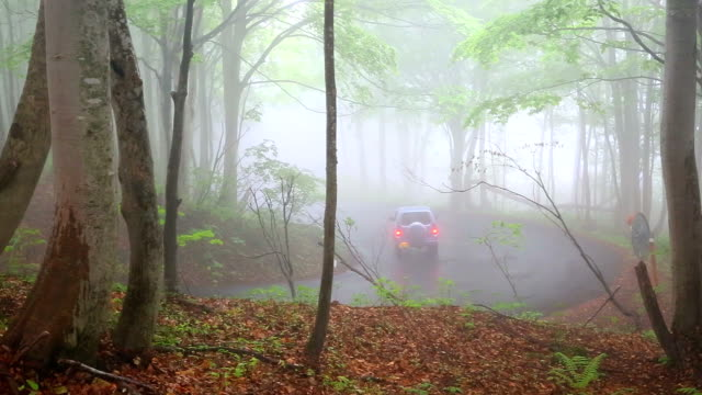 car on the road through forest in fog. - fog stock videos & royalty-free footage