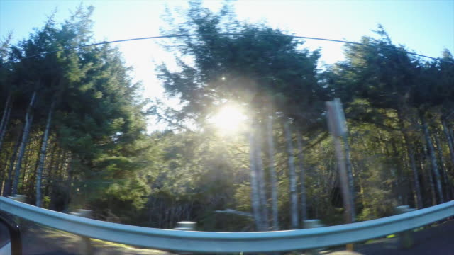 Car passing forest