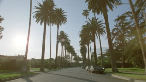 car point of view driving down palm tree-lined street with houses on either side / beverly hills, los angeles - los angeles county stock videos & royalty-free footage