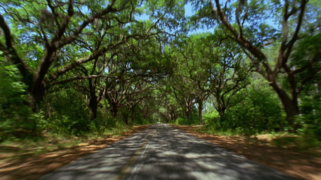 car point of view driving on country road lined with live oak trees / savannah, georgia - georgia country stock videos and b-roll footage