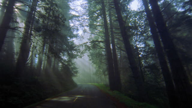 vídeos de stock, filmes e b-roll de car point of view driving on road through forest with sunlight shining through trees / redwood national park - ponto de vista de filmagem