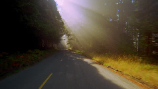 car point of view driving on road through forest with sunlight shining through redwood tree / california - nadelbaum stock-videos und b-roll-filmmaterial