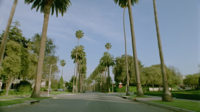 car point of view driving on street lined by palm trees in beverly hills / los angeles, california - palm tree stock videos & royalty-free footage