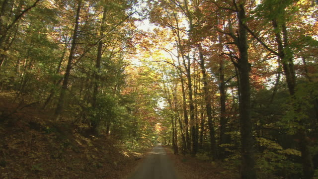 Car point of view, driving over dirt road under canopy of autumn foliage.