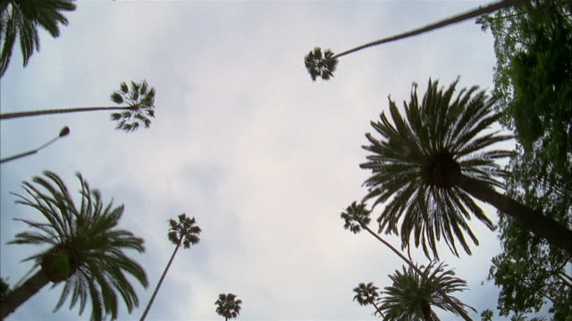 car point of view looking up at palm trees / santa monica, california - inquadratura estrema dal basso video stock e b–roll