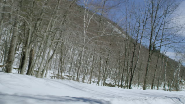 car point of view of tree covered mountains during winter - winter点の映像素材/bロール