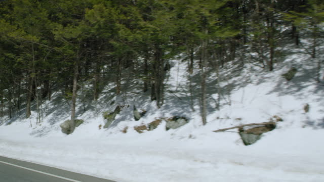 car point of view of trees in forest during winter - winter点の映像素材/bロール