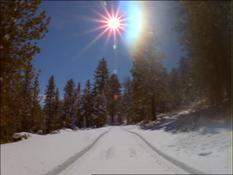 car point of view on snowy road lined with pine trees - pinaceae stock videos & royalty-free footage