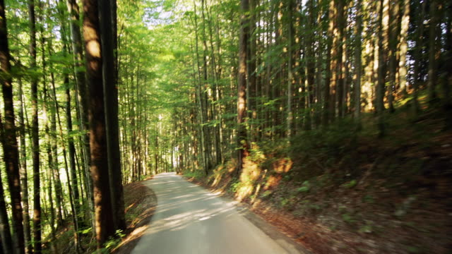 Car point of view winding one-lane road through forest near Lupitsch / Styria, Austria