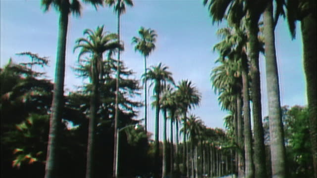pov car riding palm tree lined road, hollywood - boulevard video stock e b–roll
