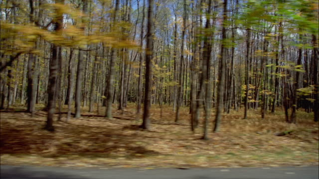 SIDE POV, Car riding through Allegheny National Forest, Pennsylvania, USA