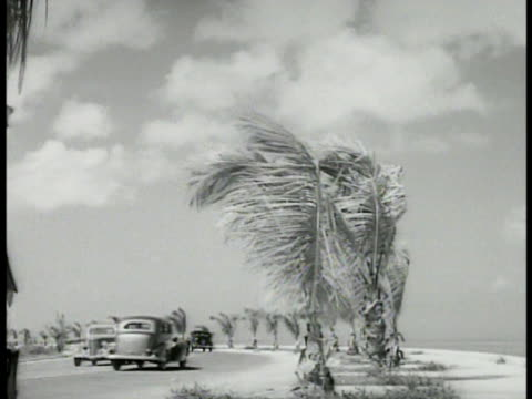 vídeos y material grabado en eventos de stock de car traveling on two lane road lined w/ palm trees. men working on road in city patching pot holes steam road roller bg. road roller machine. man... - 1934
