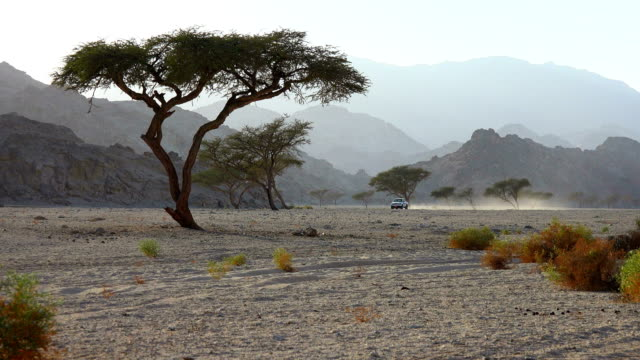 a car travels through acacia trees in the desert - acacia tree stock videos & royalty-free footage