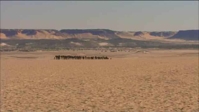 Caravan Camels In Sahara Desert