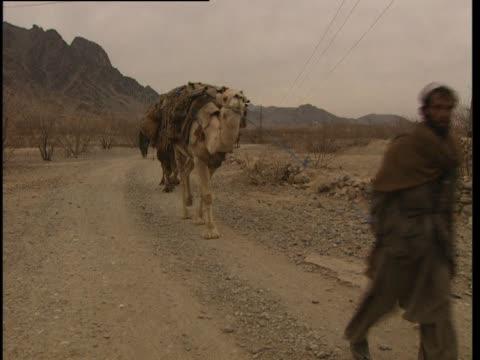 stockvideo's en b-roll-footage met caravan of camels travels along a dirt road. - werkdier