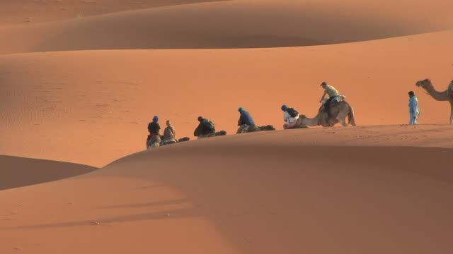 ws caravan of tourists on camelback riding over dunes of sahara's erg chebbi at sunrise, morocco - camel stock videos and b-roll footage