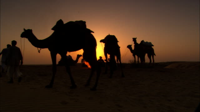 a caravan of travelers and camels rest in the desert for the night. - camel train stock videos & royalty-free footage