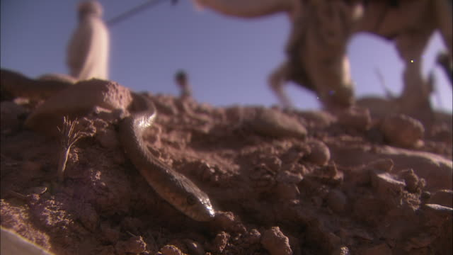 a caravan passes by a snake in the sahara desert in morocco. - sahara desert stock videos & royalty-free footage