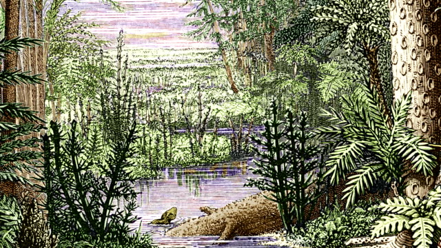 carboniferous landscape - botany stock videos & royalty-free footage