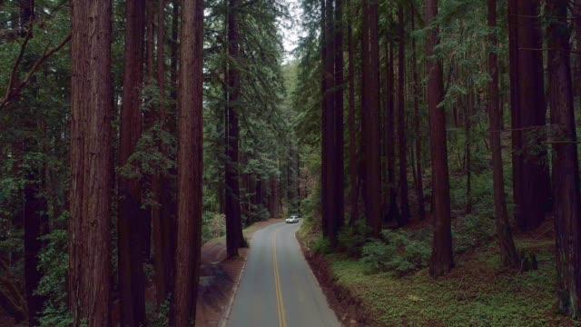 vídeos de stock, filmes e b-roll de cartão que conduz na estrada na floresta de sequoias em califórnia do norte, costa oeste dos eua - sequoia sempervirens