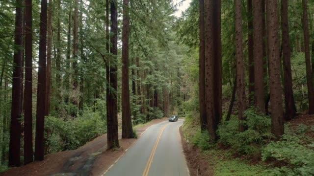 vídeos y material grabado en eventos de stock de tarjeta de conducción en la carretera en el bosque de sequoias en el norte de california, ee.uu. costa oeste - bosque de secuoyas