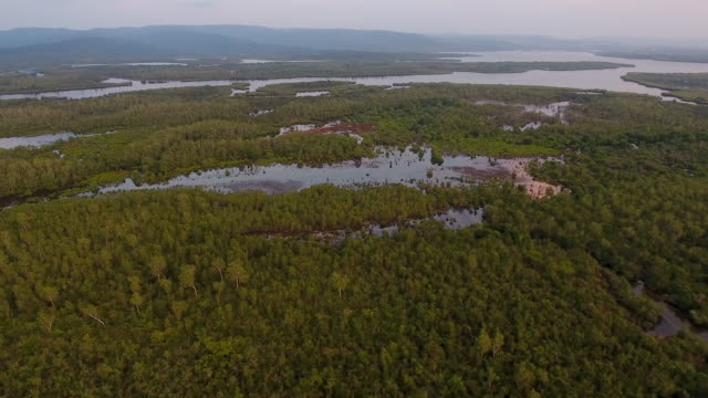 cardamom national park, cambodia - mangrove tree stock videos & royalty-free footage