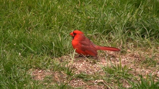 Cardinal Essen im Erdgeschoss