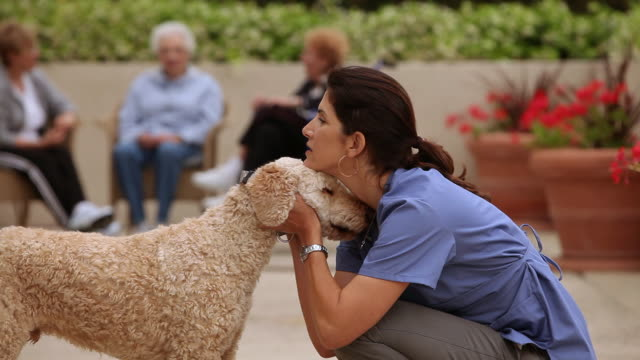 """""""ms care giver playing with dog / laguna woods, ca, united states"""" - pampered pets stock videos and b-roll footage"""