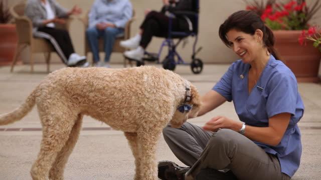 "vídeos de stock, filmes e b-roll de ""ms care giver playing with dog / laguna woods, ca, united states"" - acariciando"