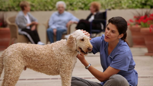 """vídeos de stock, filmes e b-roll de """"ms care giver with dog and senior citizens in background / laguna woods, ca, united states"""" - acariciando"""