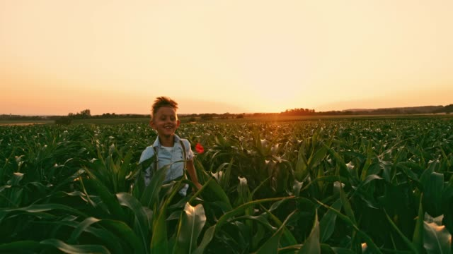 Carefree boy running in idyllic,rural corn field at sunset,real time