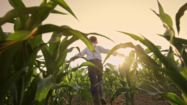 unbeschwerte junge läuft in sonniger, ländlicher kornfeld, real-time - agrarbetrieb stock-videos und b-roll-filmmaterial