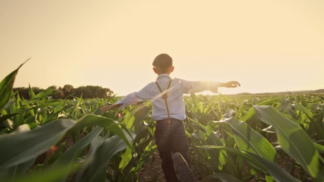 carefree boy running in sunny,rural corn field,real time - boys stock videos & royalty-free footage