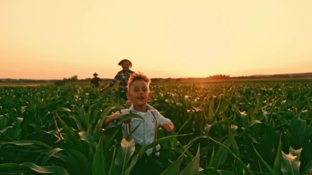 carefree farmer family running in idyllic,rural corn field at sunset,real time - family with one child stock videos & royalty-free footage