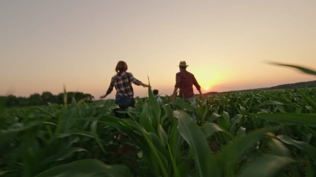 carefree farmer family running in idyllic,rural corn field at sunset,real time - two parents stock videos & royalty-free footage