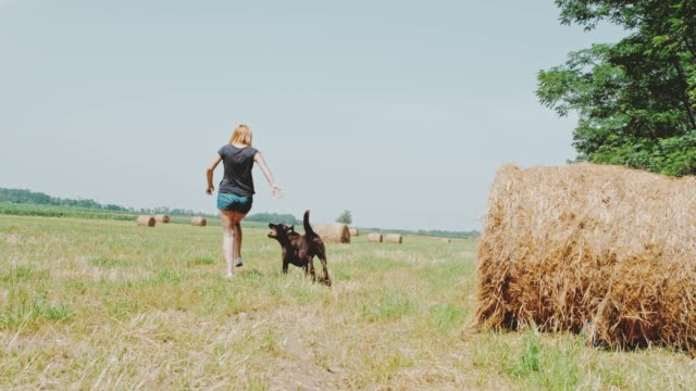 ms carefree woman and dog in sunny rural field - hay stock videos and b-roll footage