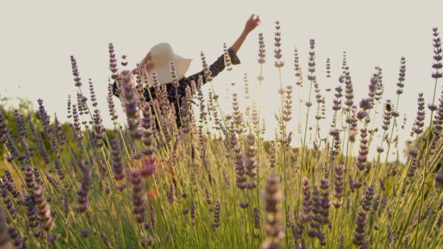 ms slow motion  carefree woman spinning in sunny,idyllic lavender field - lavender stock videos & royalty-free footage