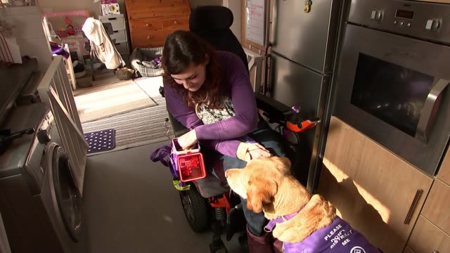 carer dog griffin shortlisted for friends for life award at crufts england london int various shots griffin the carer dog along turning on light... - crufts hundezuchtschau stock-videos und b-roll-filmmaterial