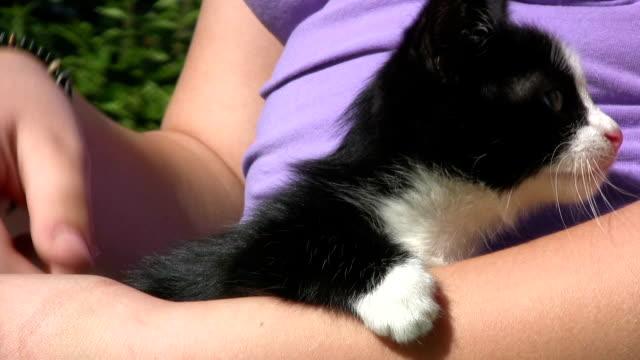 caressing a little kitten - petite teen girl stock videos and b-roll footage