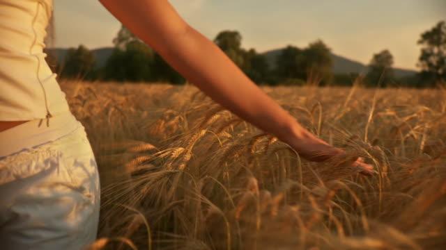 HD: ACCAREZZANO il grano
