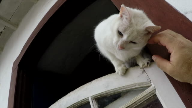 caressing - mixed breed cat stock videos & royalty-free footage